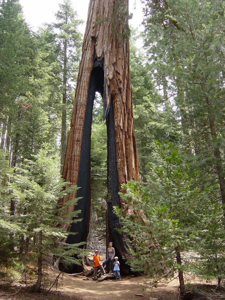 Célèbre 161 best Sequoia National Park images on Pinterest | Nature  HX79
