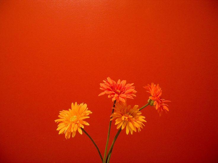 Znalezione obrazy dla zapytania red orange flower