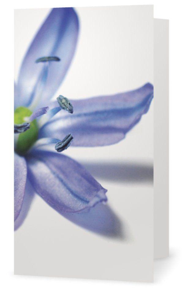 Scilla. Cards for florists. Gift card for flower arrangements. Scandinavian design. Jäderberg & Co.