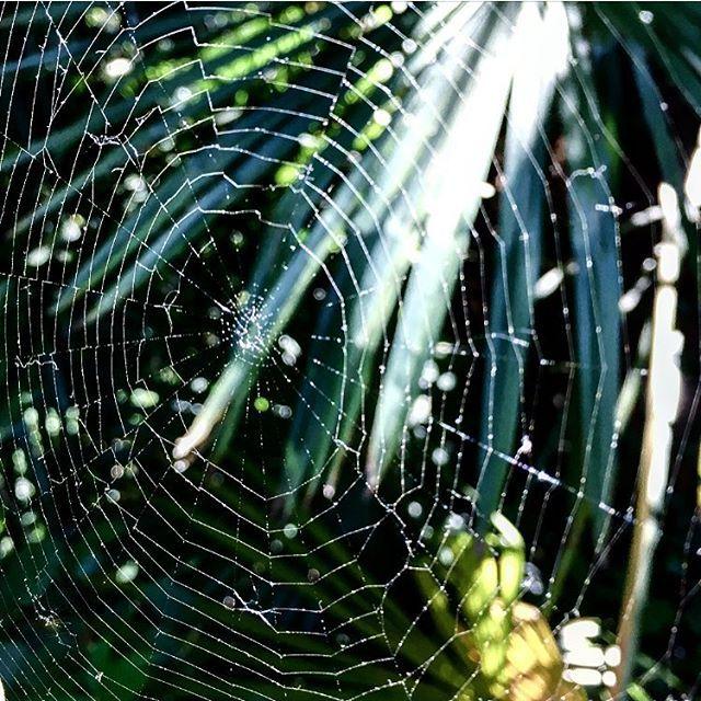 Where are you, little spider? ❓⁉️🕷🕷 #ragnatela #spiderweb #ragno #spider #bergamo #bg #bergamoalta #cittaalta #ortobotanico #ortobotanicobergamo #botanic #botanicalgarden #flowers #plants #nature #photography #natura #fiori #piante #sunday #domenica #afternoon #walking #sanvigilio #happy #enjoy