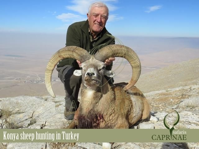 Konya sheep hunting in Turkey