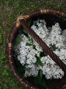 panier lilas