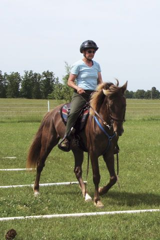 Perform ground-pole work to help your pacey horse learn to gait; even confirmed pacers find it difficult to pace over ground poles, and will instead perform a well-balanced, four-beat gait.