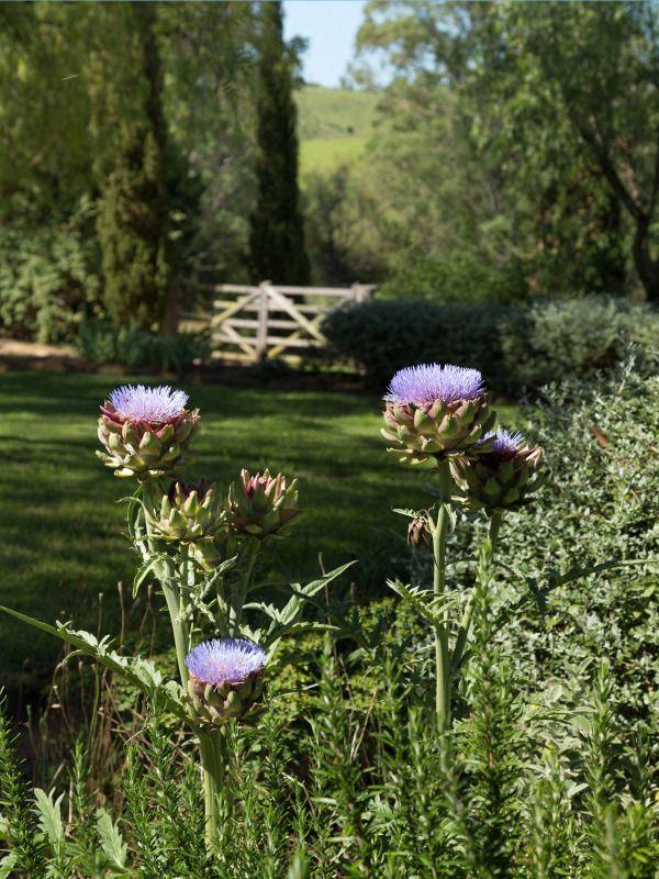 61 best images about australian rural gardens on pinterest for Rural australian gardens
