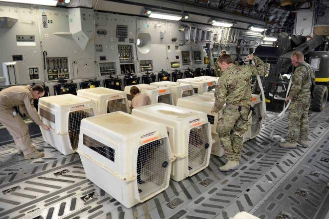 Herrick 18 Stories: Military Dogs homeward bound