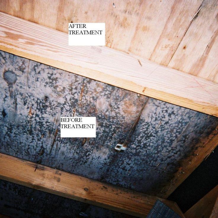 Black Mold Attic Plywood