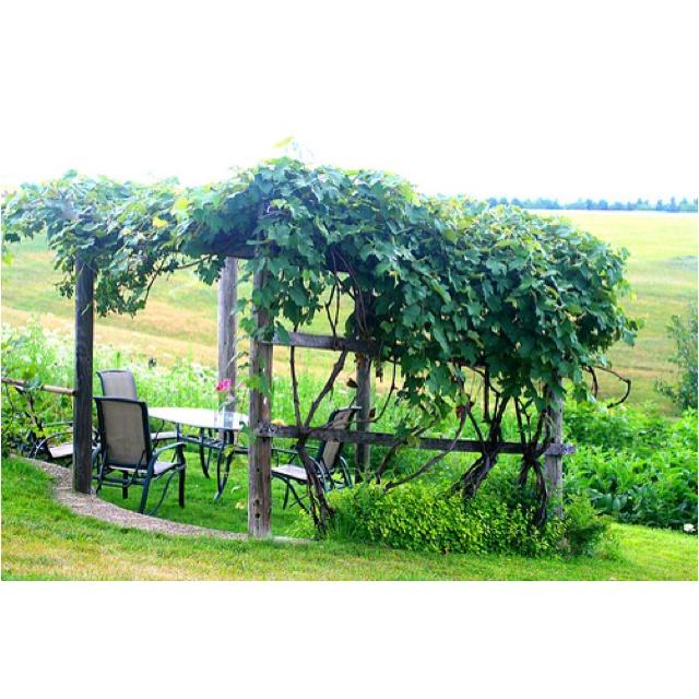 Beautiful grapes arbor gartenimpressionen pinterest - Balkon arbor ...
