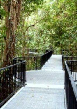 Enjoy the rainforest boardwalk, Baral Marrjanga, at Mossman Gorge. #elevatedwalk