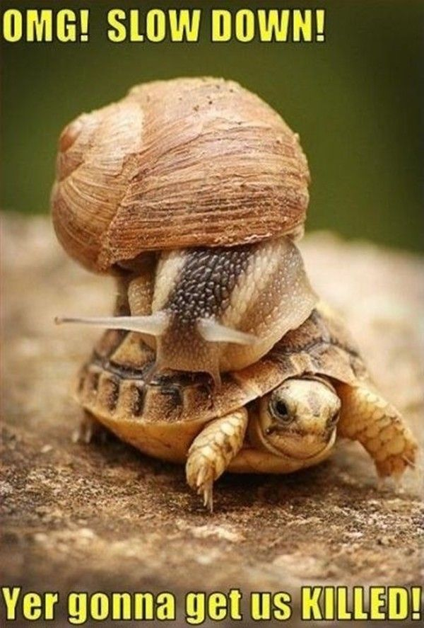 animal humor with captions | tortoise yer gonna get us killed ,oh my god slow down, tortoise snail ...