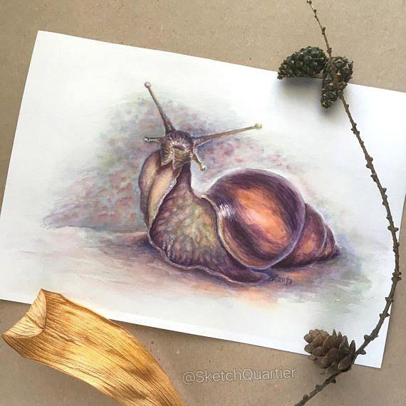 Snail original watercolour painting. Snail art painting of
