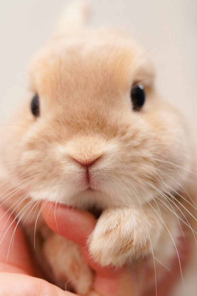 Cute Bunny A Little Tiny Baby With A Little Tiny Baby Nose With