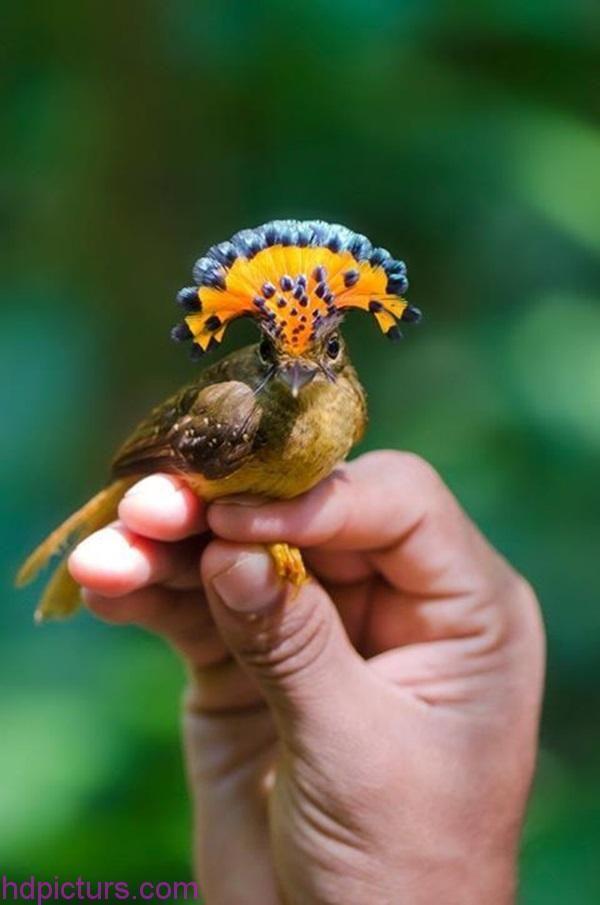 صور حيوانات 2018 خلفيات حيوانات جميلة وصور اجمل الحيوانات Amazon Animals Pet Birds Weird Animals