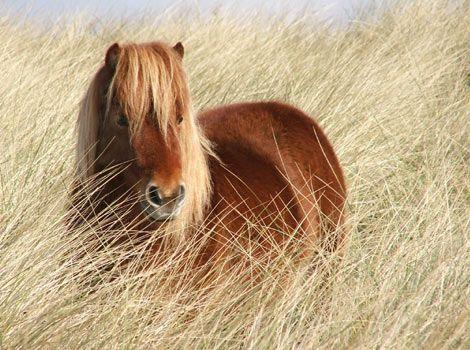 http://ashleynikole.hubpages.com/hub/Different-types-of-Horses