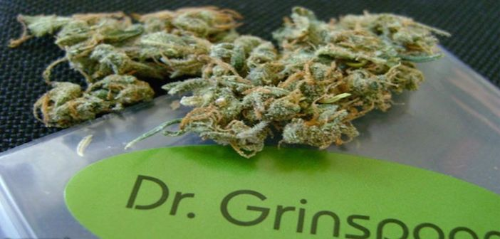 My Alltime-Favorite: Dr. Grinspoon, The Unusual Pure Sativa Strain - #MMJ #Strains - http://thenationalmarijuananews.com/2016/08/dr-grinspoon-the-unusual-pure-sativa-strain/#utm_sguid=151367,7af3db15-c62e-9826-d936-d09cec3020a8