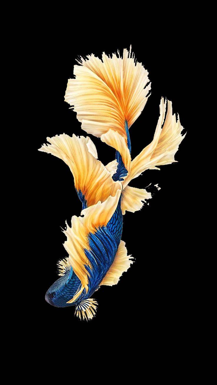Картинка рыбки для айфона