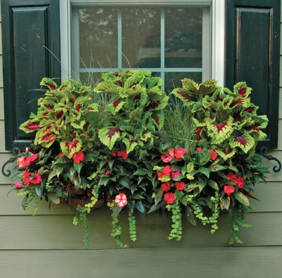 91 Best Images About Window Box Ideas On Pinterest