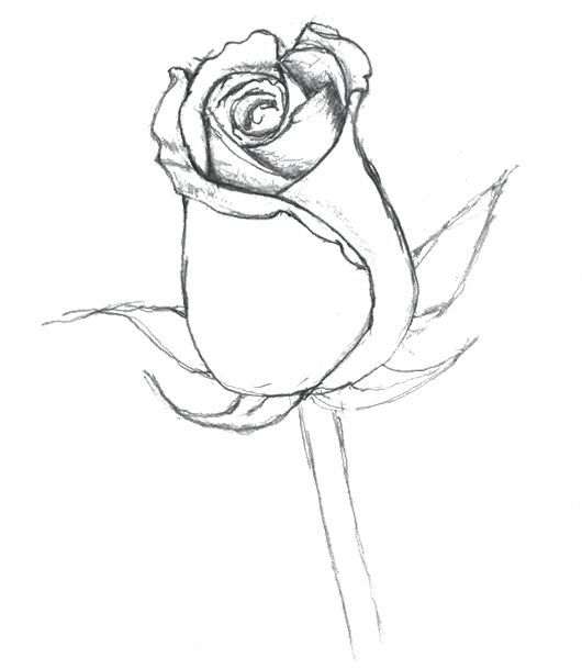 Really Fragrant Flower Coloring Page