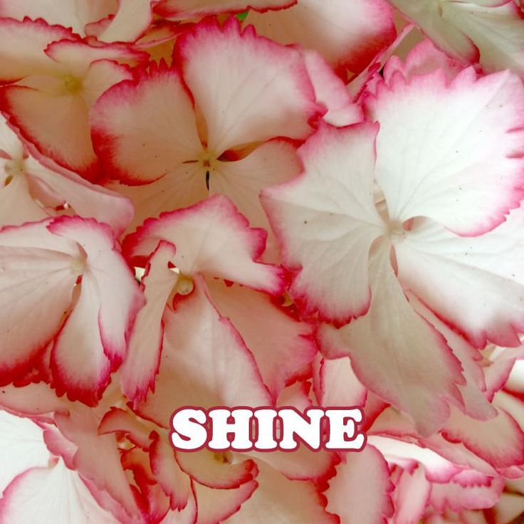 """Check out my new album """"Shine"""" produced by Music Screen, distributed by DistroKid and live on Spotify!"""