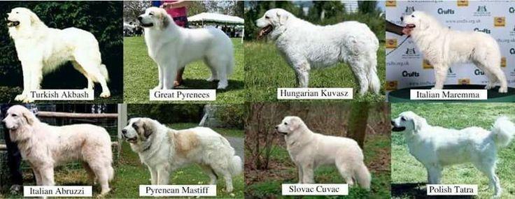 Vogtende hyrdehunde i diverse udgaver