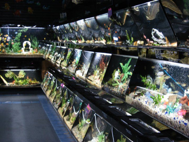 17 best images about aquariums fish on pinterest for Fish store san francisco