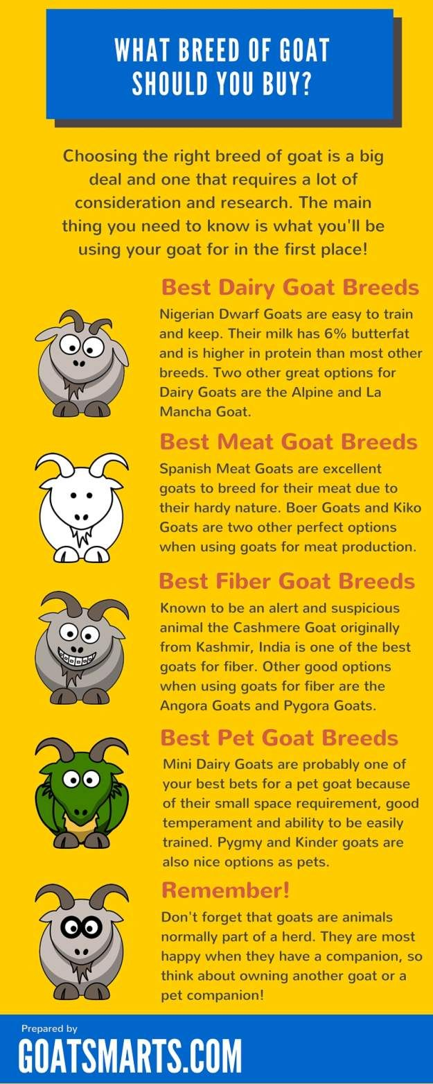 Goat Breeds Infographic 1