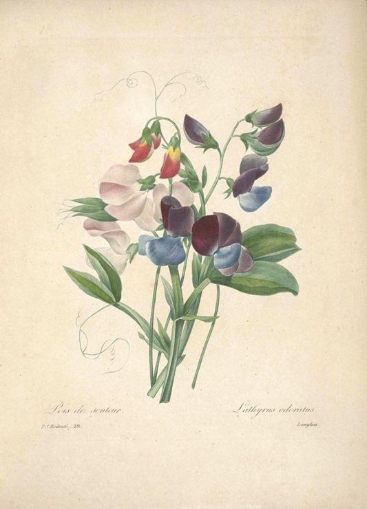 продаются ботанические рисунки растений открытки настолько яркая, что