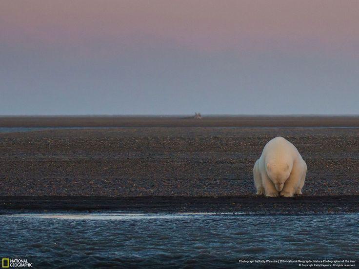 no snow, no ice? // Photo and caption by Patty Waymire