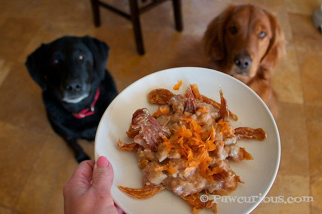 Game Day! With Pawcurean Dog Nachos | Pawcurious: With Veterinarian and Author Dr. V