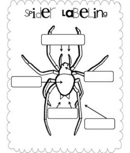 Spider Labeling for charlottes web unit