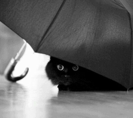 Raining Cats & Dogs #blackcatsrule