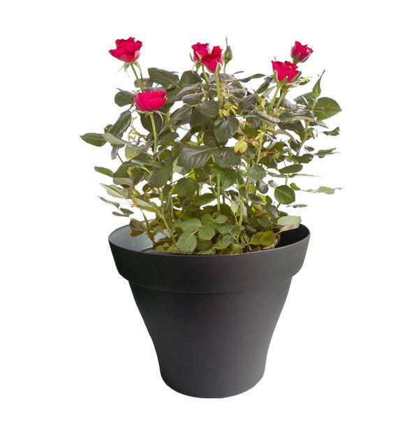 91 best Plantes d\'intérieur avec pots noir images on Pinterest ...