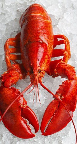 29 Best Lobster Humour Images On Pinterest Lobsters So