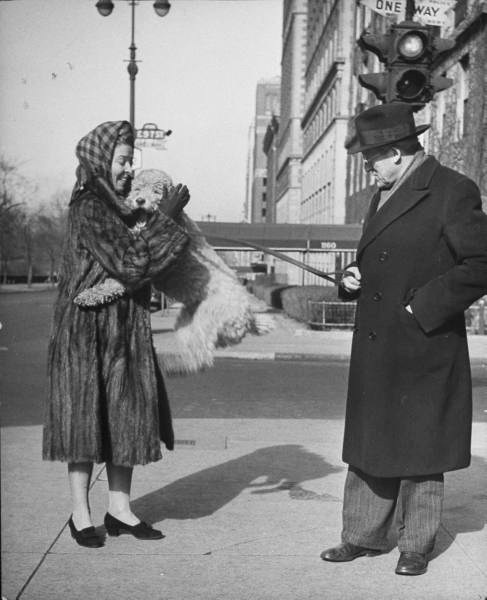 Conductor Artur Rodzinski looks on sternly as his poodle jumps into his mink coat-clad wife's arms on 57 St & 5th Ave- NYC - Photo by Nina Leen - 1944