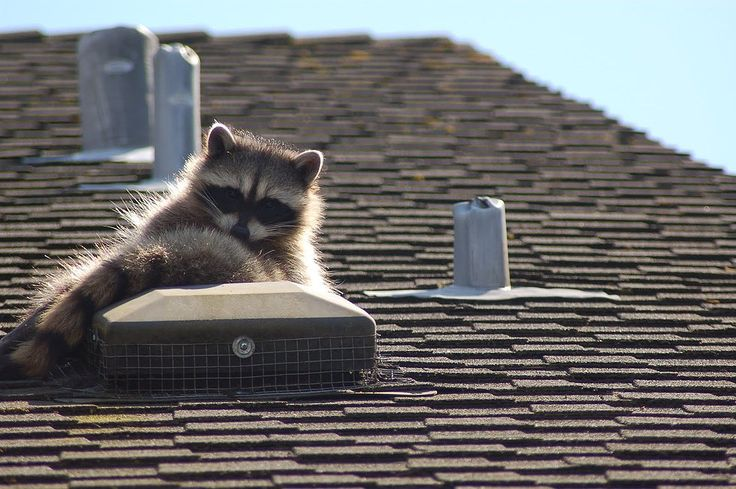 #Exterminator Services Québec (Canadian Province) City, Pest Control, Capture, Moisissure, Extermination, Bungalow, House, Rat- Catcher Residential, Commercial, Industrial Living  Wasps,  Removal, Consultant Cage . Extermination  Montreal (City/Town/Village) price exterminator bed  , how much does it cost for a professional to remove raccoons from attic. rat extermination cost , rat exterminators near me , Humane  control , Exclusion , Nuisance , Chimney , decomposition smells , Pointe…