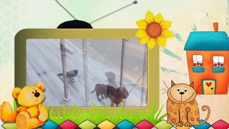 Видео клип Коты и Другие... Серия 3. Коты и другие животные.