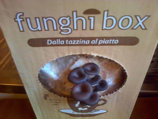 Funghi Ostrica Funghibox. Giorno 4. #funghi #faidate #coltivare #kit #pleurotus #orto
