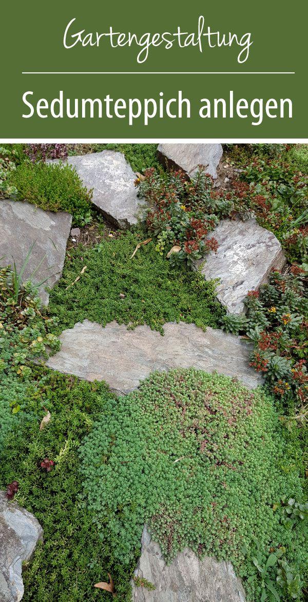 A sedum carpet for unsightly garden areas