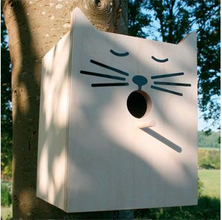 Nist-Katze