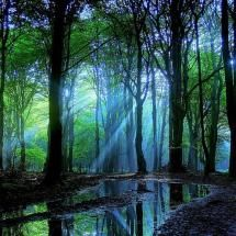 Forest!: Lights, Magic Forests, Sun Ray, Enchanted Forests, Colors, Dark Forests, Trees, Earth Day, Photography