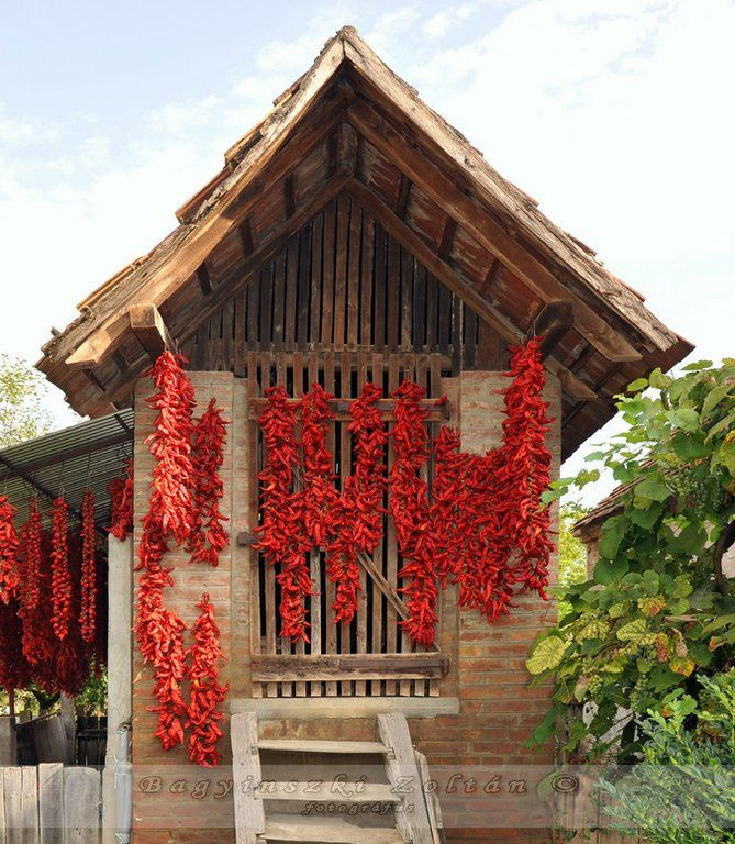 Hungarian folk architecture with paprika