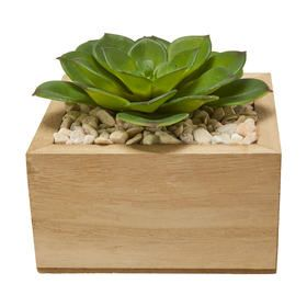 Wooden Base Plant
