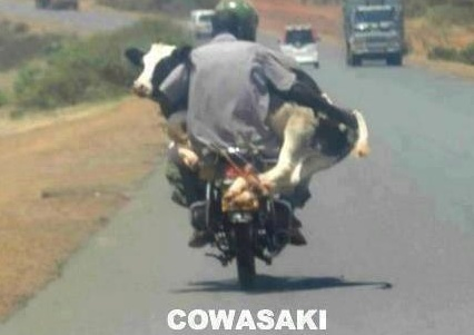 Funny Pictures - Cowasaki | A Collection of Clean Jokes/Humor
