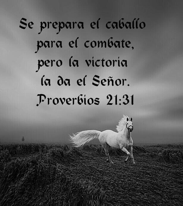 """""""Algunos confían en carros, y otros en caballos; mas nosotros en el nombre del SEÑOR nuestro Dios confiaremos""""...Salmos 20:7"""