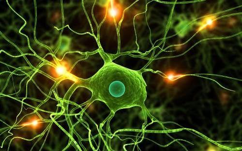 Cercetatorii au dorit sa afle daca intentia de vindecare are putere asupra celulelor cerebrale – iata ce s-a intamplat!Pentru realizarea studiului, oamenii de