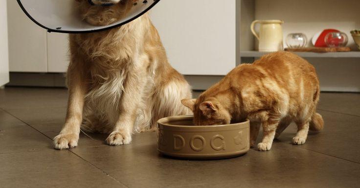 Doenças caninas imunomediadas. Imunomediado é um termo usado para descrever uma situação na qual o sistema imune ataca o corpo, causando uma doença, infecção ou enfermidades. Essas doenças podem também ser referidas como doenças auto-imunes. É desconhecido o porquê desses tipos de condições ocorrerem em cachorros. Alguns veterinários acreditam que a causa pode ser genética, ...