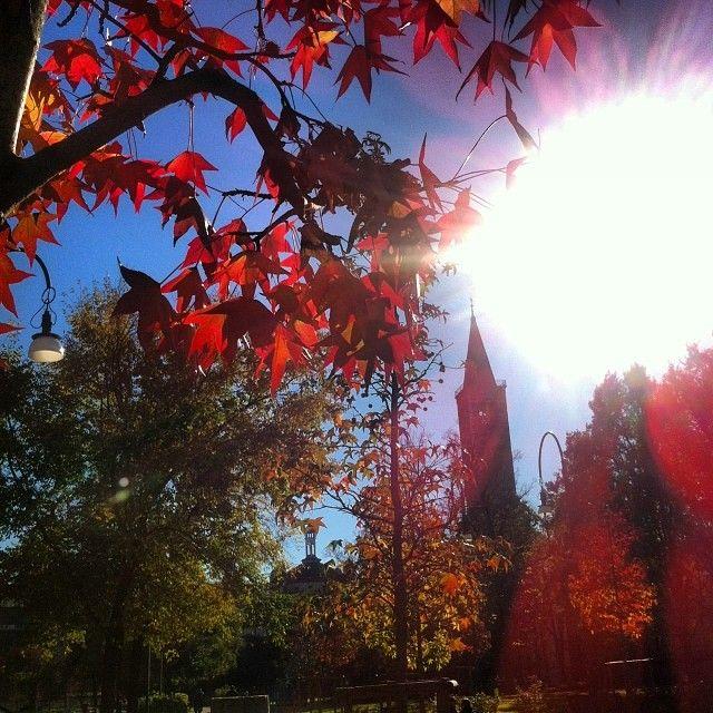 Si sta come d'autunno sugli alberi le foglie bellissime.