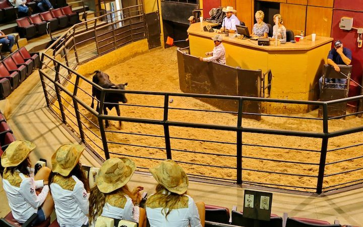 ASTA DEL BESTIAME PRESSO L'OKLAHOMA NATIONAL STOCKYARDS