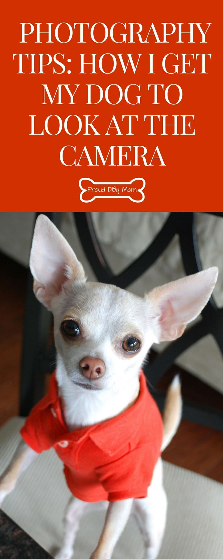 Dog Photography Tips: How I Get My Dogs To Look At The Camera