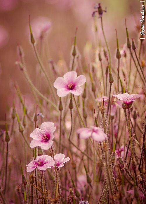 Luke 12:27 Look how the wild flowers grow: they don't work or make clothes for themselves. But I tell you that not even King Solomon with all his wealth had clothes as beautiful as one of these flowers,