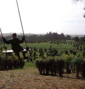 237 best Christmas Tree Farm images on Pinterest   Christmas time ...
